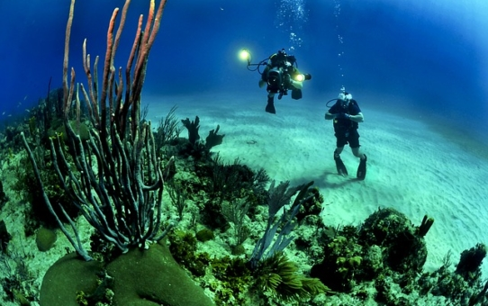 Where to Go Scuba Diving in Key West